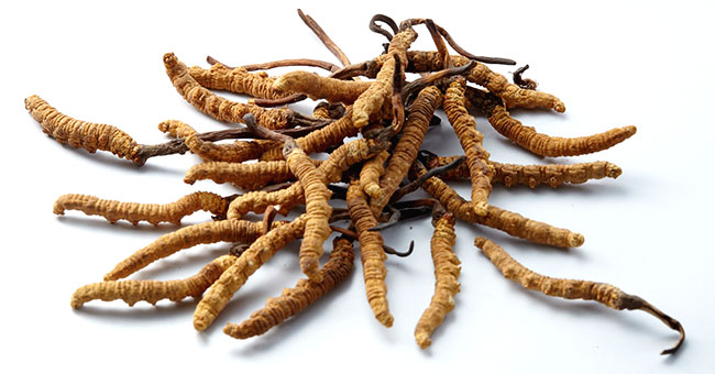 BRAND'S® ingredients cordyceps detail page